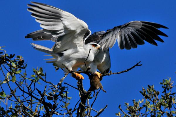 Birding en Monfragüe