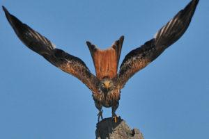 Birding en Extremadura