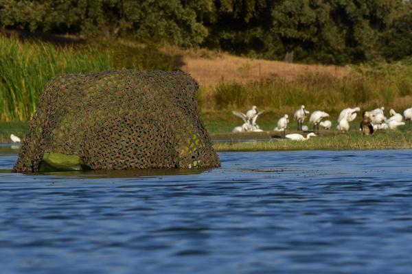 Birding en el agua